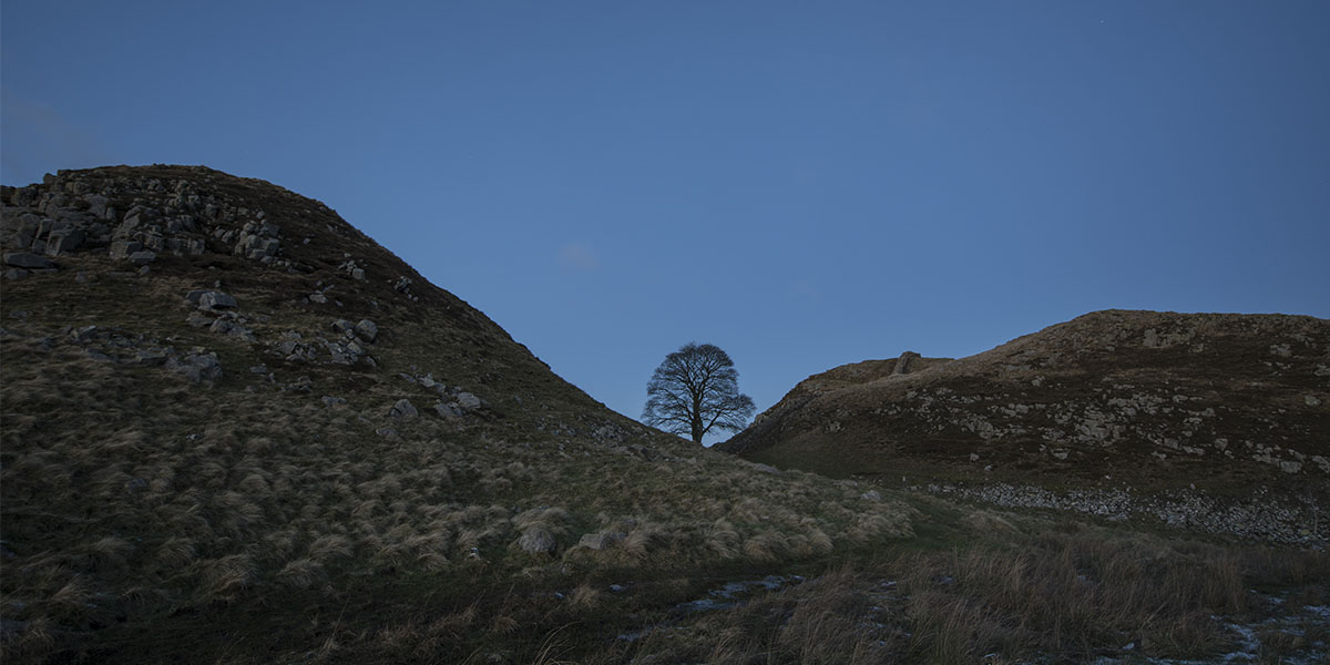 Lone Sycamore, Sycamore gap, Hadrians Wall, Northumberland By Michael Walker